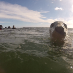 UK Freediving - Farnes